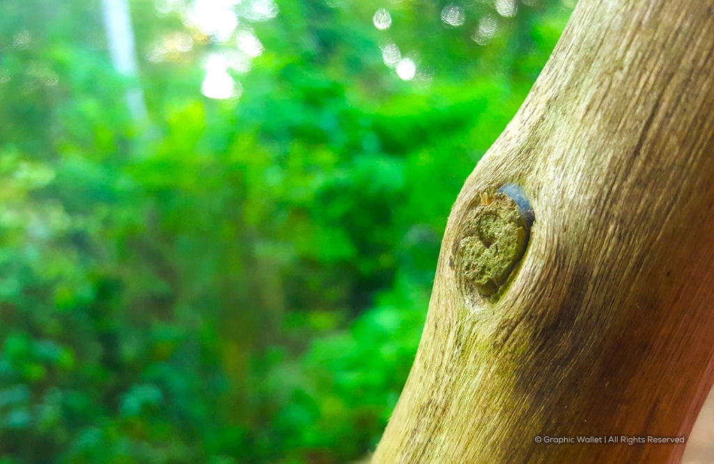 Focused Dry Wood With Blur Background